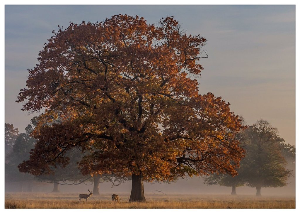 Autumns_Postcard_-_Bushy_Park_London_by_David_David_Photos_UK_1024x1024