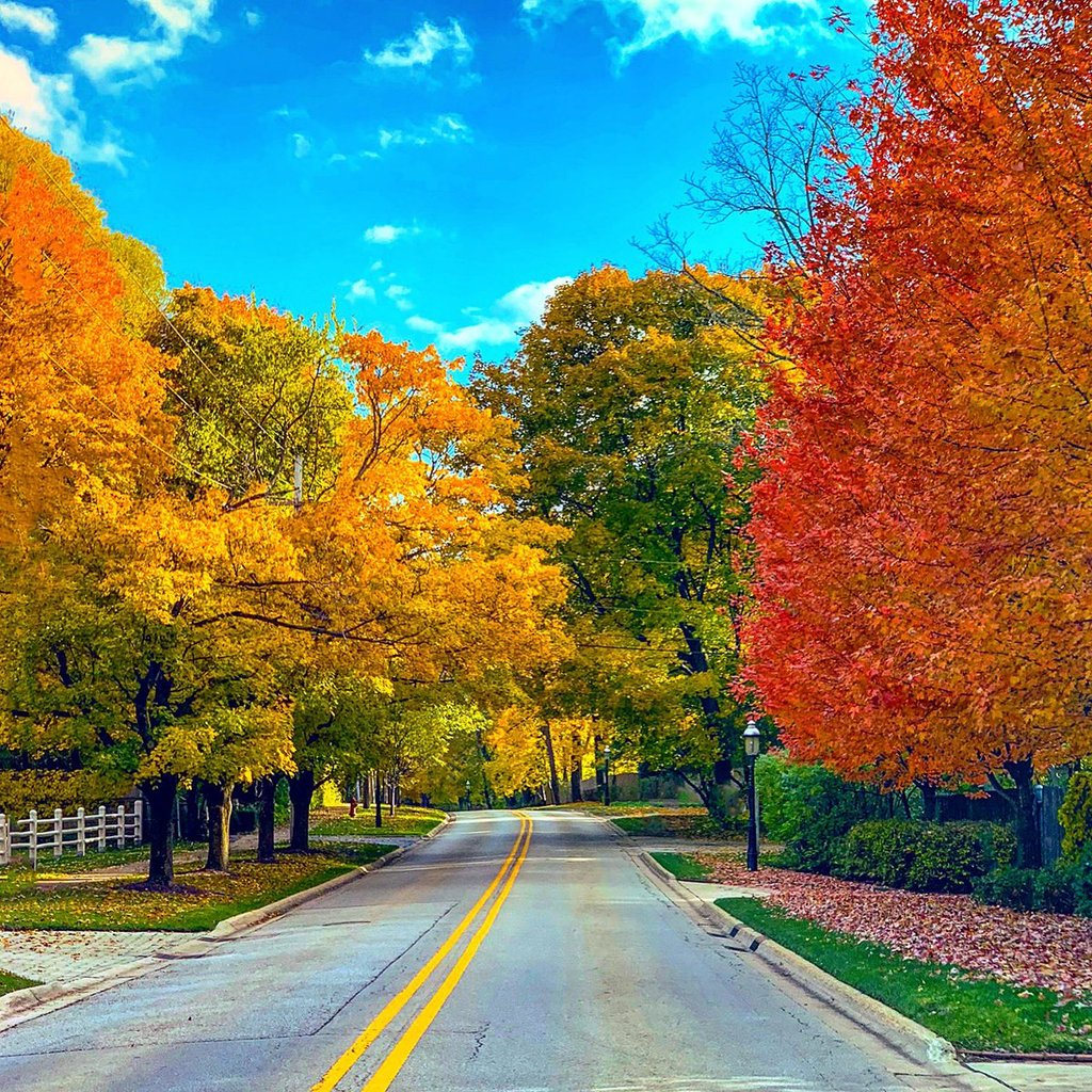 Fall_Colors_in_the_Chicago_Suburbs_by_Andy_Masur_Andy_Masur1_1024x1024