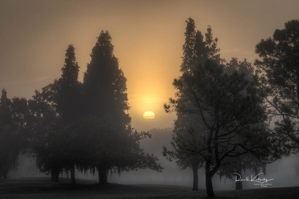 Foggy_morning_in_Valrico_Florida_by_Ronald_Kotinsky_rkotinsky_1024x1024