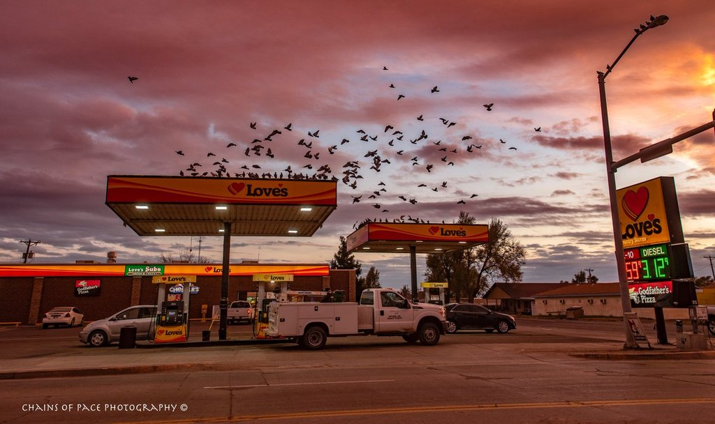 Gathering_of_birds_at_sunset_in_Oklahoma_by_Arlene_Winfrey_chainsofpace_1024x1024