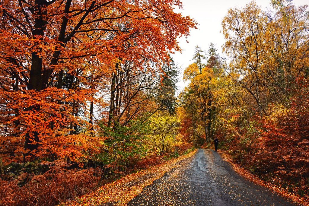 Great_autumnal_colours_on_the_way_down_to_Derwentwater_by_Neil_Squires_Neil_Squires_1024x1024