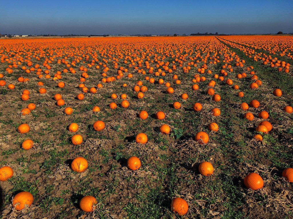 Pumpkins_in_The_Fens_by_Great_Ouse_Fenland_Fisheries_Team_OuseFishEA_1024x1024