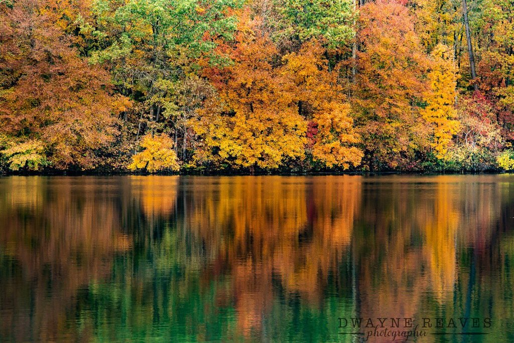 Simply_fall._The_Northern_area_of_N.C_is_beautiful_right_now_by_Dwayne_Reaves_dwaynereaves_1024x1024
