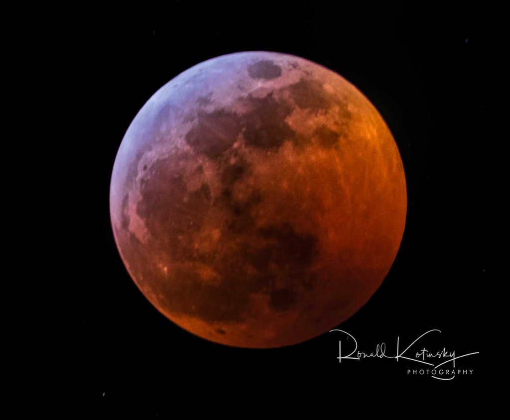 Super_Blood_Red_Wolf_Moon_-_Jan._20th_2019_-_Beverly_Hills_-_Florida_by_Ronald_Kotinsky_rkotinsky_1024x1024