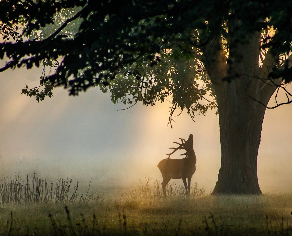 1st_Place_A_stag_in_Bushy_Park_London_by_David_David_Photos_UK_1024x1024
