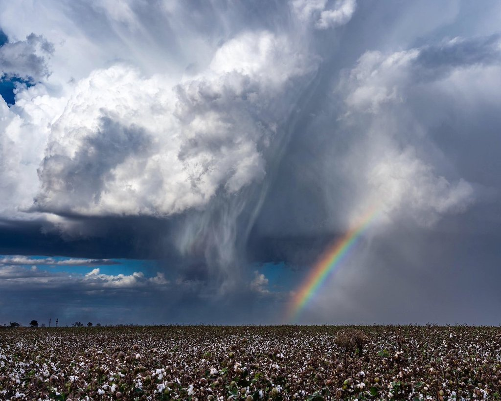 1st_Place_Thunderstorm_and_rainbow_over_a_cotton_field_near_Eloy_AZ_by_Kyle_Benne_KyleBenne_1024x1024