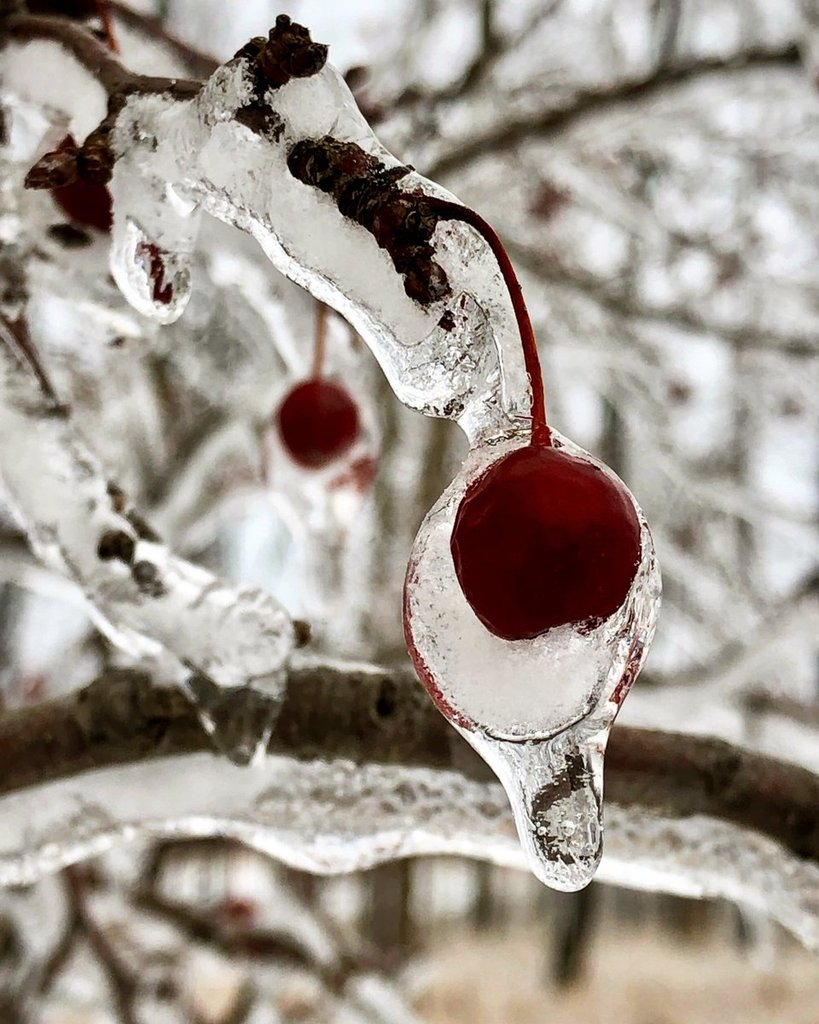 Ice_storm_in_Chicago_by_Chris_Spoons_ChrisSpoons_1024x1024