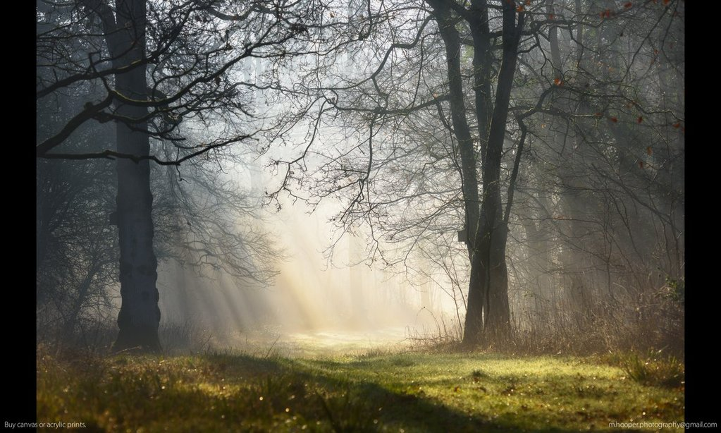 Morning_mist_and_sunbeams_in_Highnam_Woods_by_Mark_Hooper_M_Hooper_Photos_1024x1024