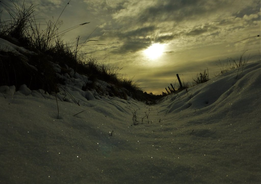 Pretty_sparkles_in_the_snow_Lethen_Nairn_Scotland_by_Lisa_Lethen_lisawood81_1024x1024