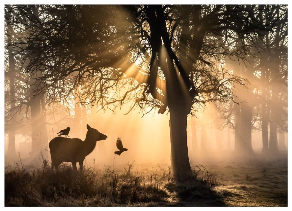 1st Place Misty morning - Bushy Park , London @David_Photos_UK
