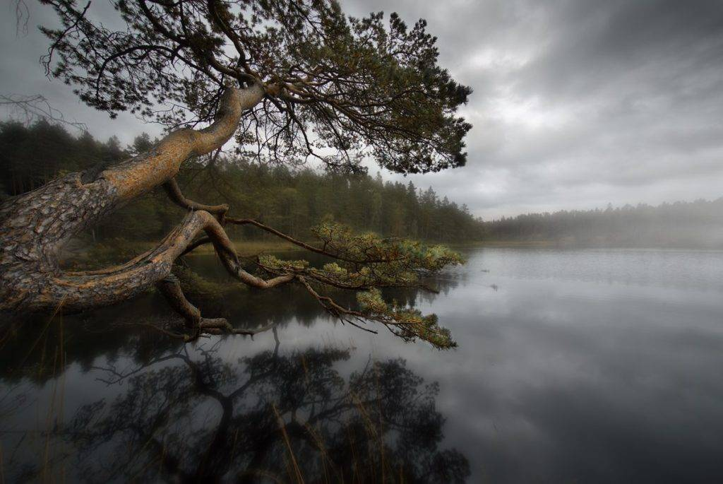 """""""Reaching out over water"""" Sweden"""