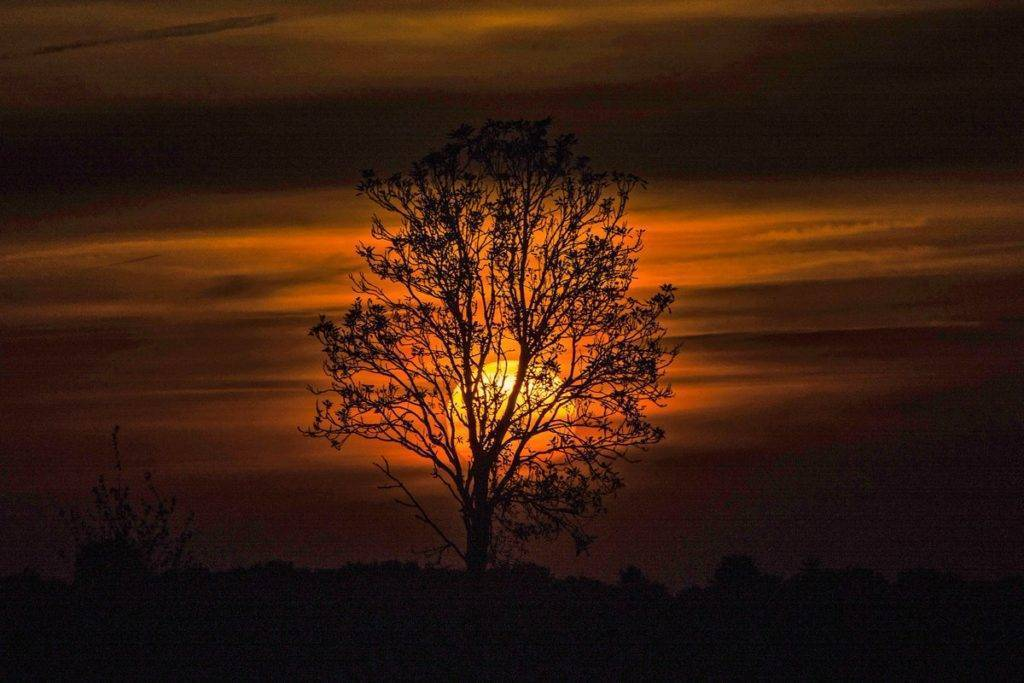 2nd Place Anita Coenen @Anita_muziek The sun going down this evening in Maria Hoop in the Netherlands behind a tree that is unfortunately dead