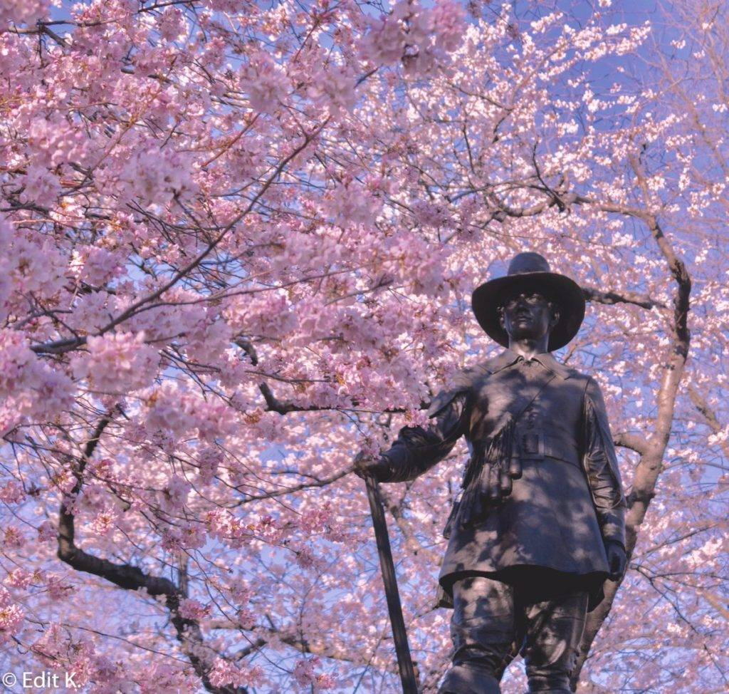2nd Place Edit K. @007_edit Springtime vibes at the Pilgrim Hill in Central Park