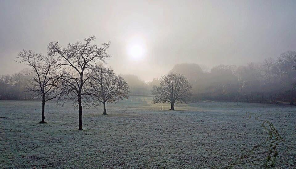 Fog and frost greet the dawn of winter. Upton Country Park, Dorset
