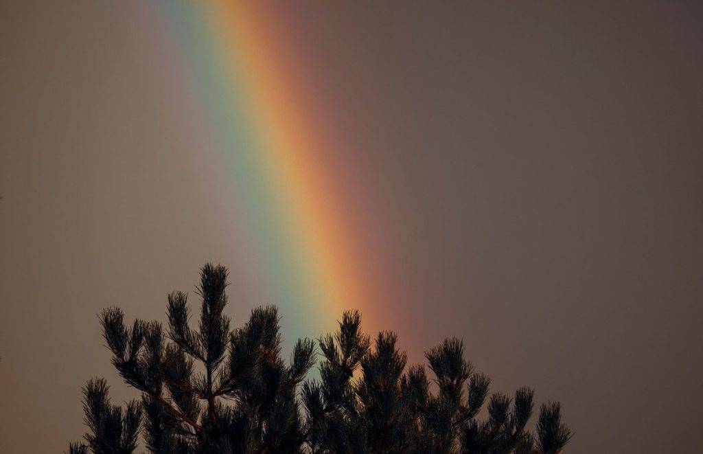 2nd Place Susan Gaskey @suezyg23 A close up using my Lumix 100-300 lens of a rainbow right at dusk.