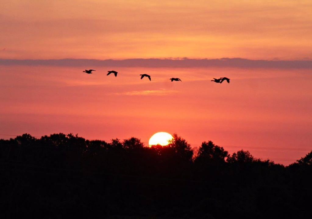 Fantastic Thursday Sunrise from Perryman, MD with a flock of Geese flying by