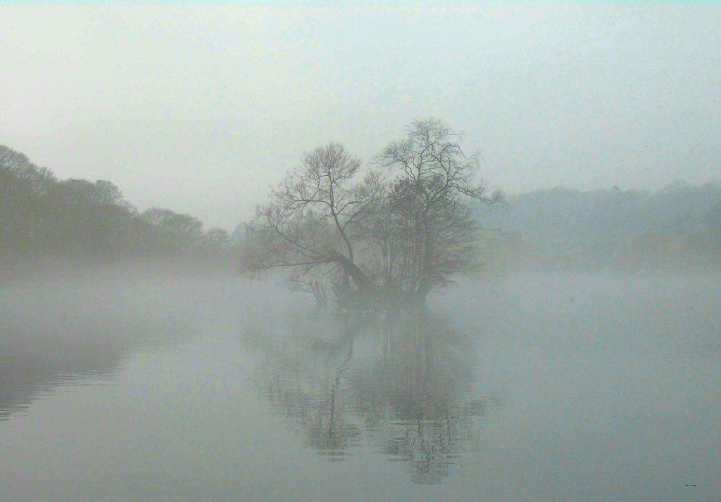 Foggy at Etherow Park, Stockport