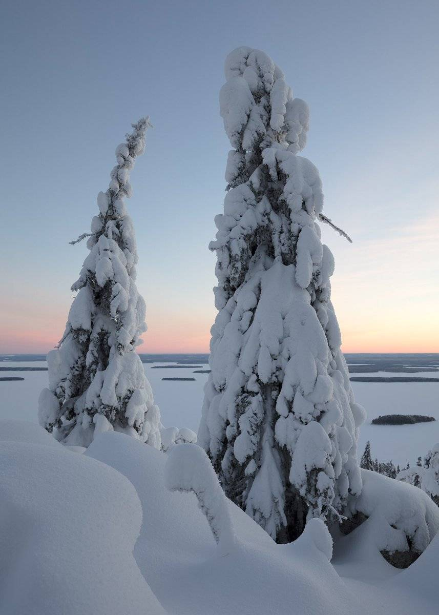 A peaceful morning in Koli National Park, Finland by Serena Dzenis @serenavsworld