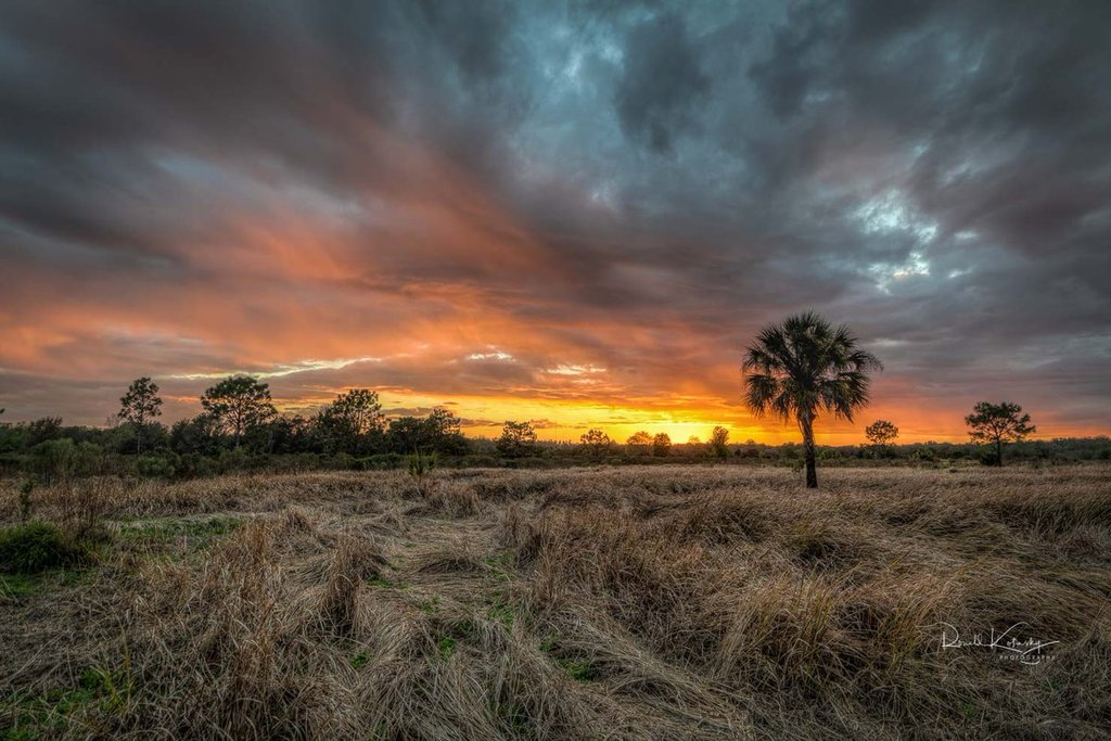 Fields_of_Fire_-_Plant_City_-_Florida_by_Ronald_Kotinsky_rkotinsky_1024x1024