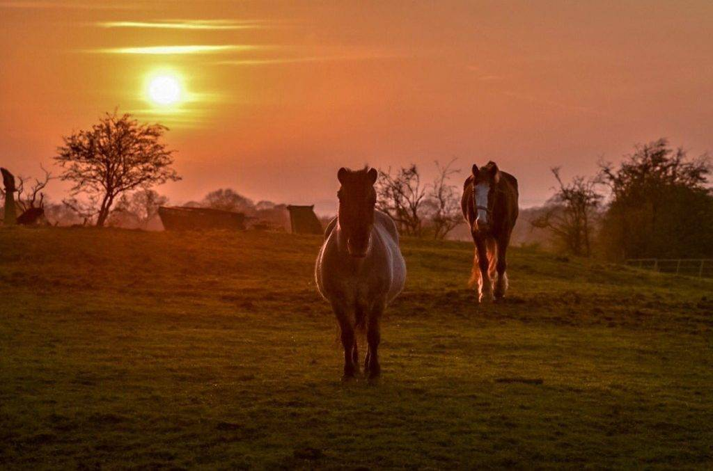 Horses at sunset Wendy Love @wendylov5