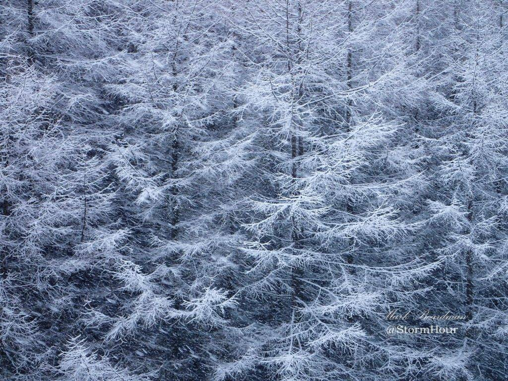 Snow on trees Macclesfield Forest, Cheshire