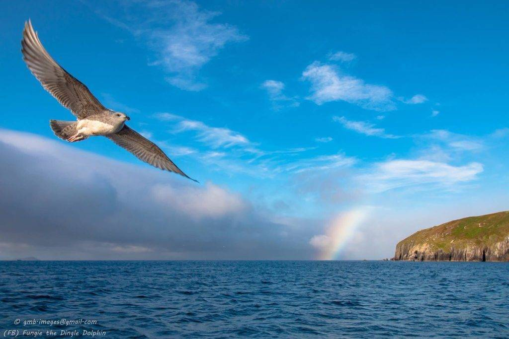 The Wild Atlantic Way by Dingle Dolphin Tours @dingle_dolphin