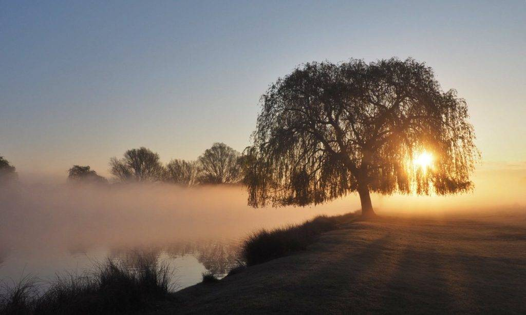 2nd Place A misty sunrise at Bushy Park by Ruth Wadey @ruths_gallery
