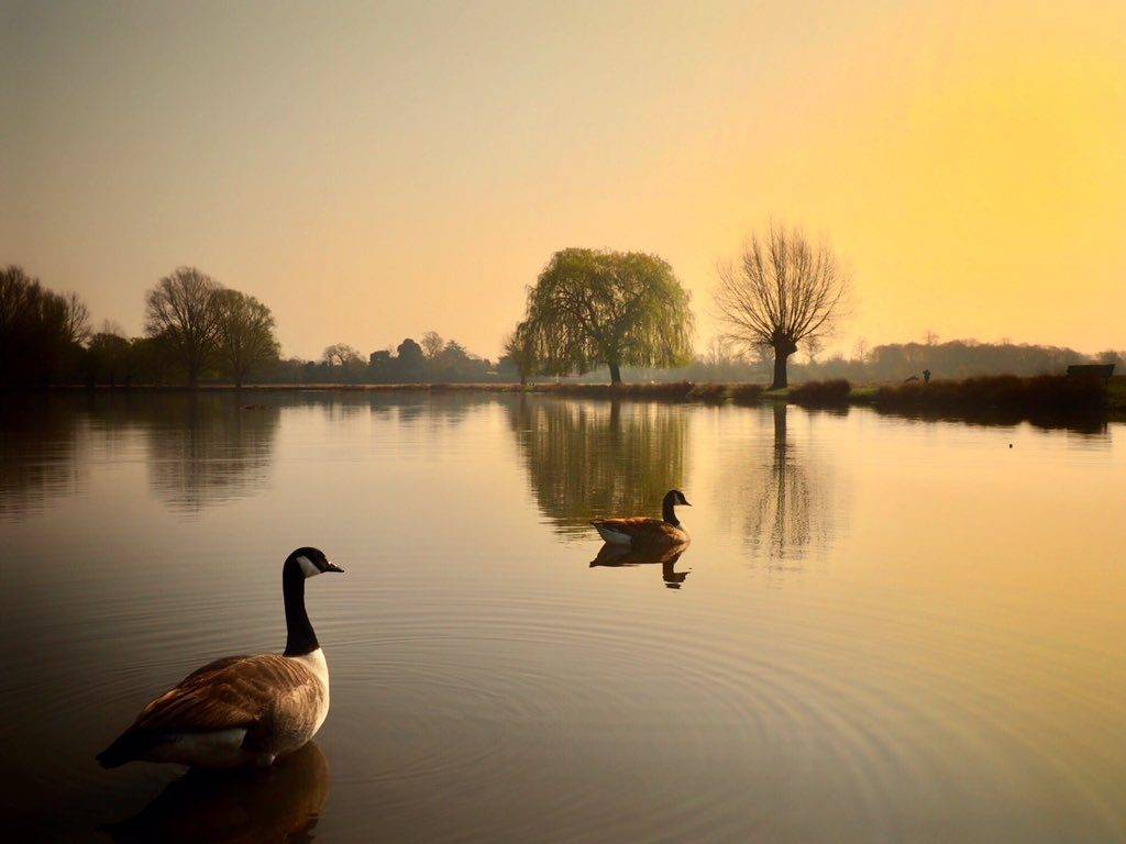 3rd Place Still waters at Bushy Park by Ruth Wadey @ruths_gallery