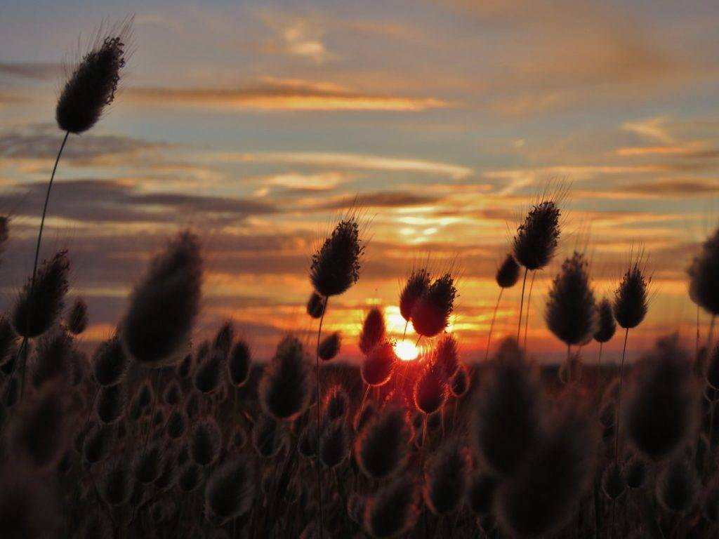 1st Place Sunset over Romney Marsh by Ian Hook @ianhook66