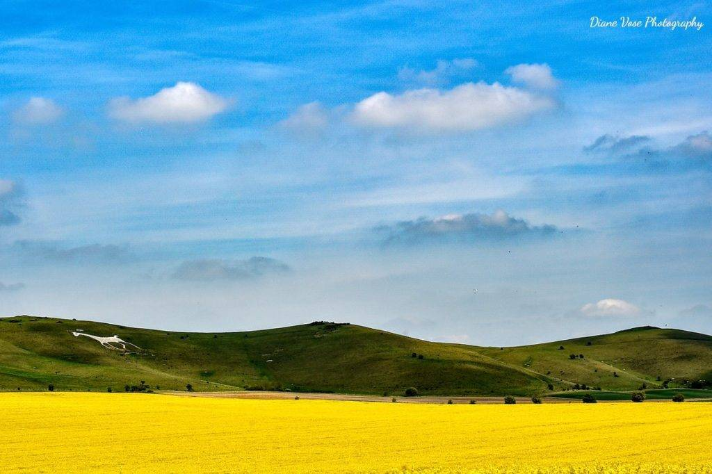 Alton Barnes White horse in the Pewsey vale by Diane Vose @dianevose