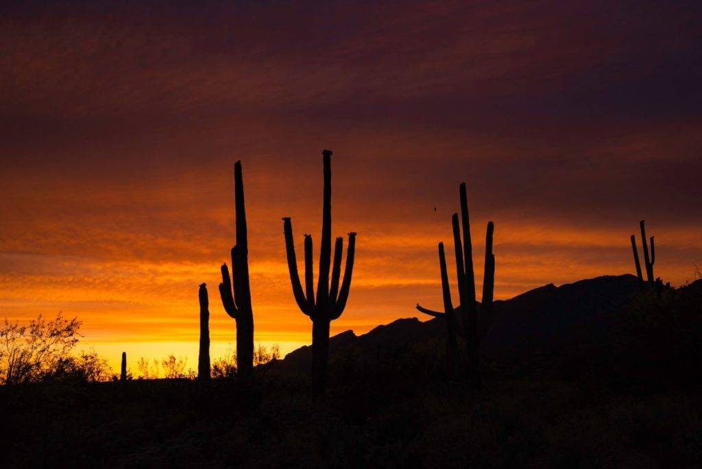 Cacti tower in front of the Catalina's in southeast Arizona by Preston Garbe Photography @GarbePreston