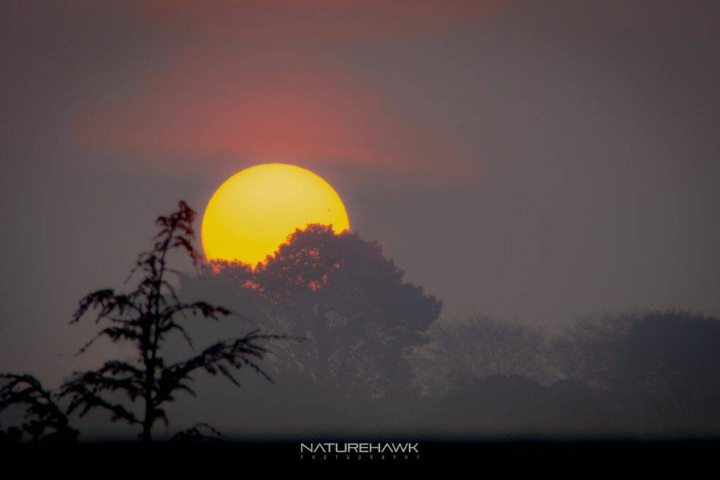 Almost perfect sunrise conditions in the New Forset...sunspot showing through the haze by Naturehawk photo @NaturehawkPhoto