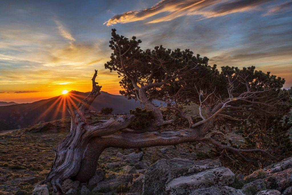 2nd Place An Ancient Bristlecone Pine Tree near Mount Evans, Colorado by Michael Ryno Photo @mnryno34