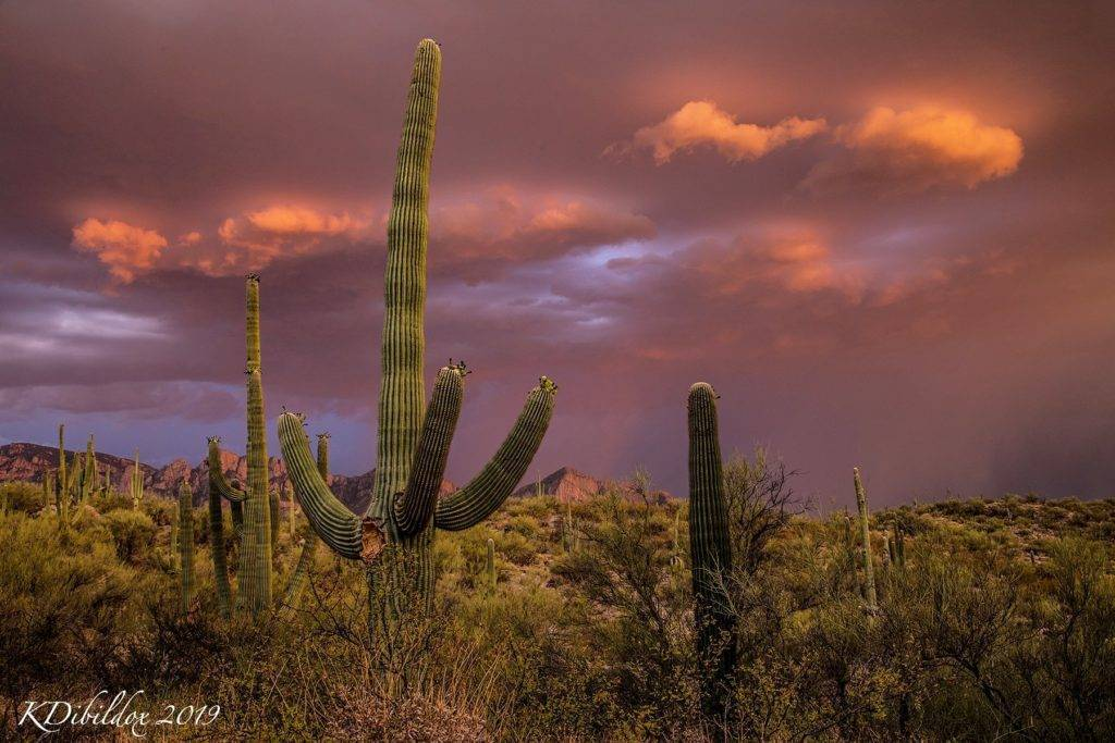 Amazing sunset at Tucson, Arizona by Kate Dibildox @KDibildoxPhoto