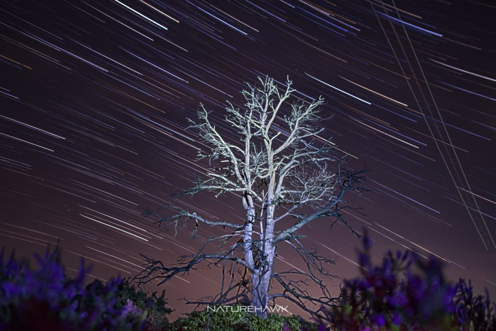Shooting star trails in the New Forest by Naturehawk Photo @NaturehawkPhoto