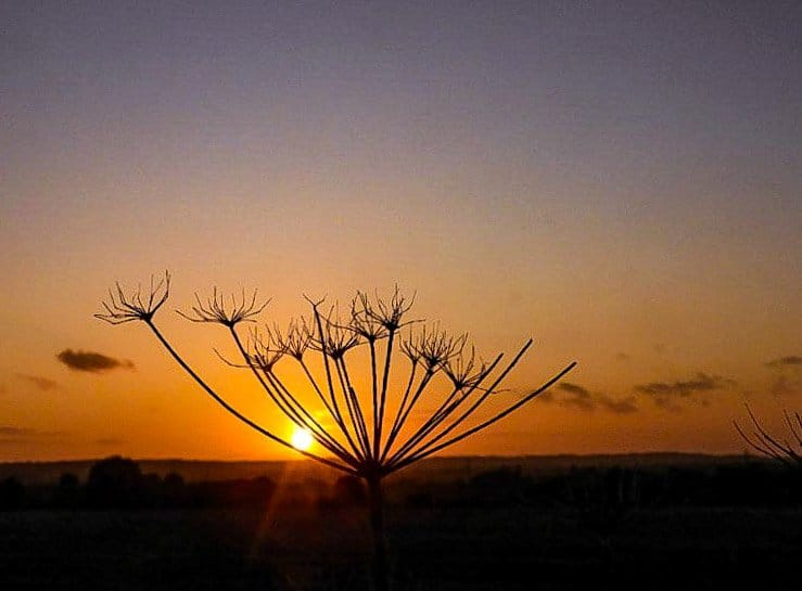 Sunset at Graveley Hertfordshire UK by Carla Sears @CarlaSears