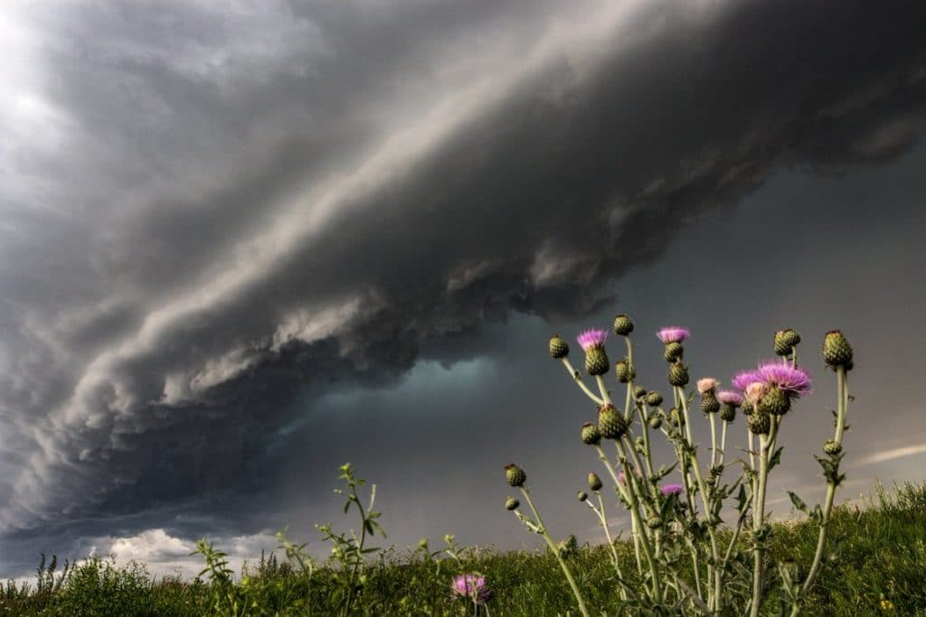 1st Place A tornado-warned supercell looms over wildflowers near Campo, CO by Greg McLaughlin @tornadoGregMc