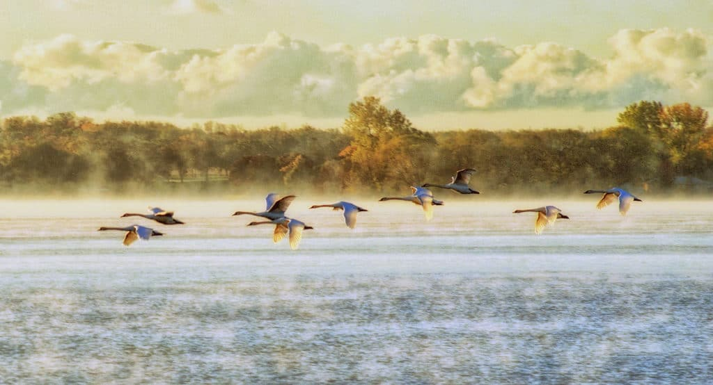 Flying-Geese