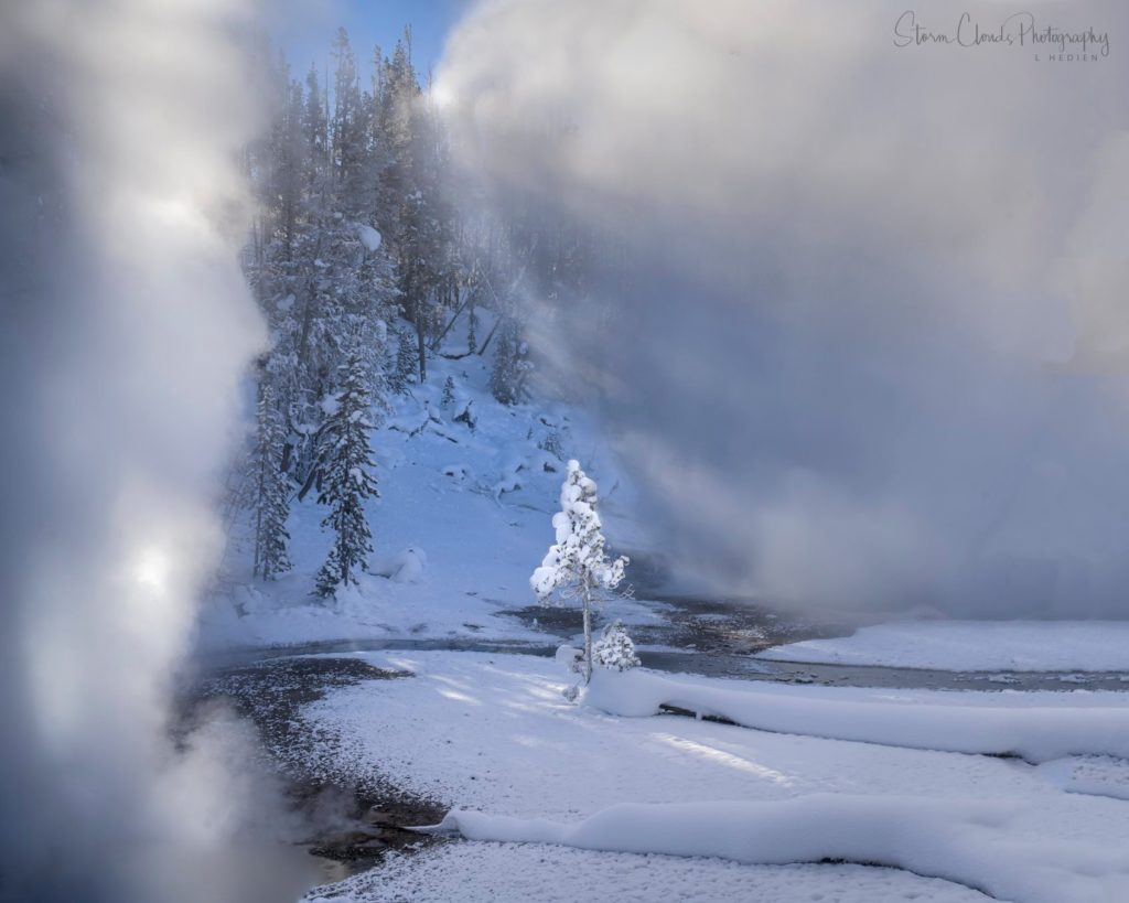 Frost covered tree illuminated by the sun and steam in Yellowstone by Laura Hedien @lhedien
