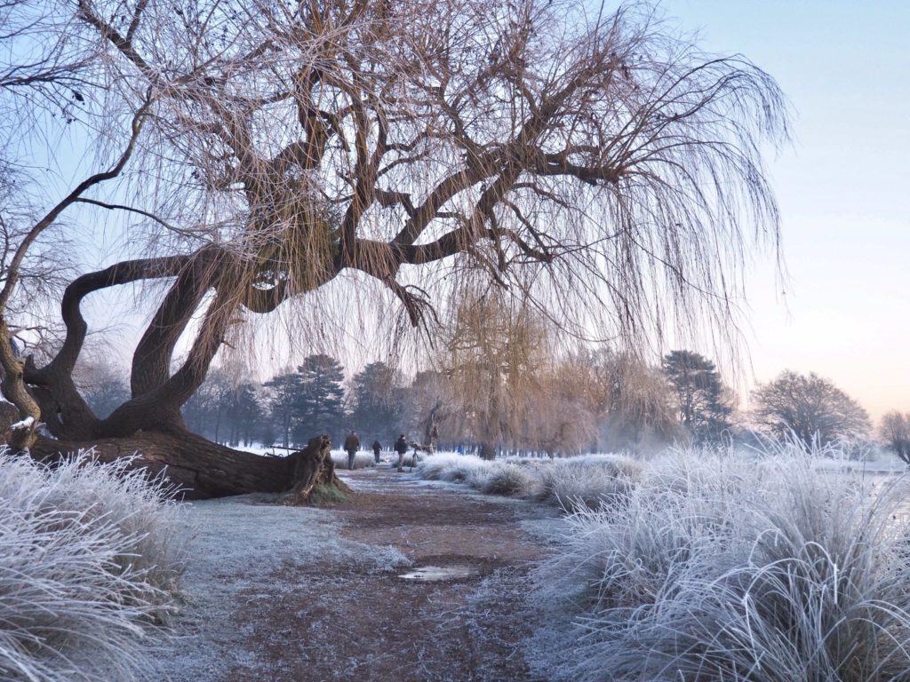 Winter wonderland at Bushy Park Teddington by Ruth Wadey @ruths_gallery