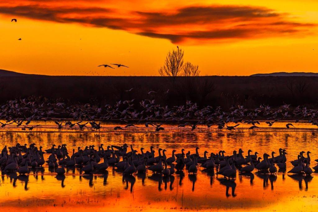 2nd Place A colorful sky moments before sunrise at Bosque del Apache National Wildlife Refuge by Michael Ryno Photo @mnryno34