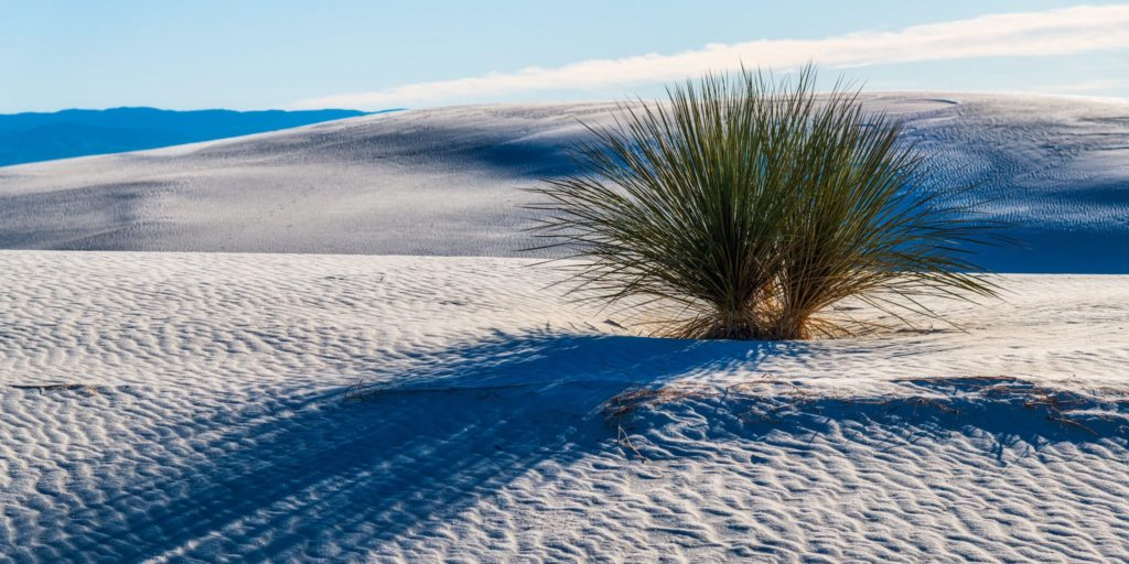 2nd Place Yucca plant at White Sands National Park in New Mexico by Michael Ryno Photo @mnryno34