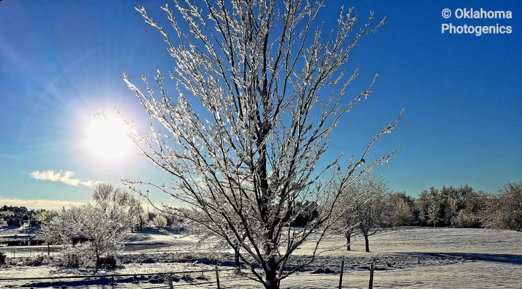 3rd Place The Glass Tree taken in Newcastle OK one morning after snowfall by Lee Kuhlman @leekuhlman