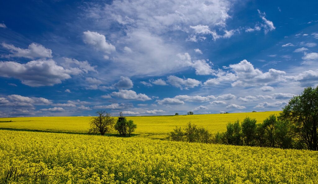 2nd Place Beautiful spring weather near Stuttgart in Germany by Wetter Ludwigsburg @lubuwetter