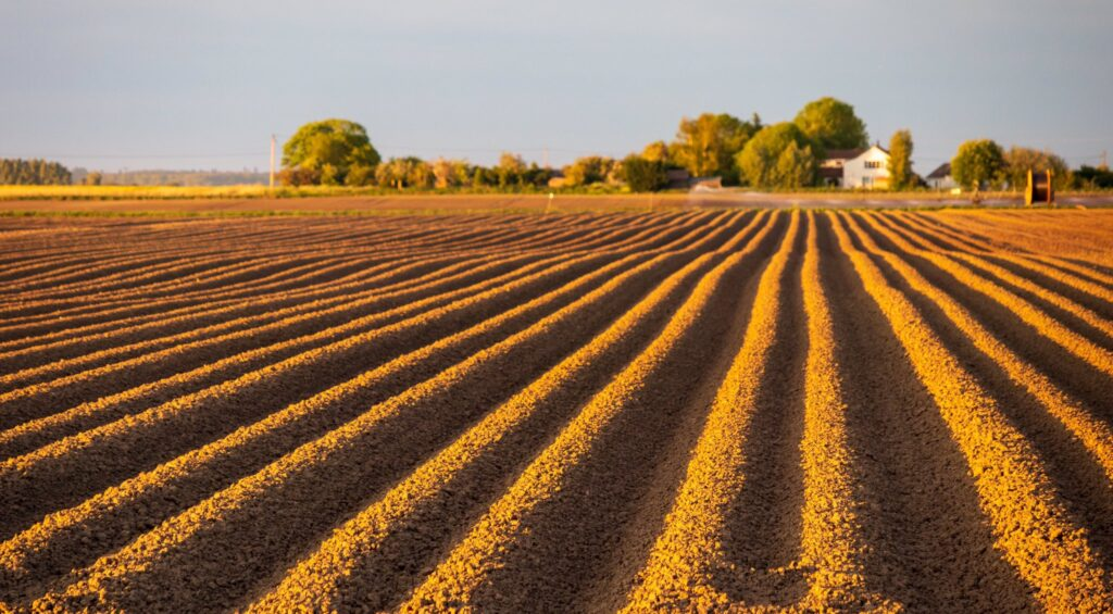 2nd Place Evening sun catching on the potato furrows on the Cambridgeshire Fens by Glynis Pierson @glynpierson