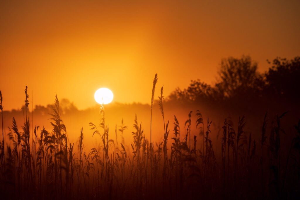 2nd Place Golden light shining through the reeds on Burwell Fen by Glynis Pierson @glynpierson