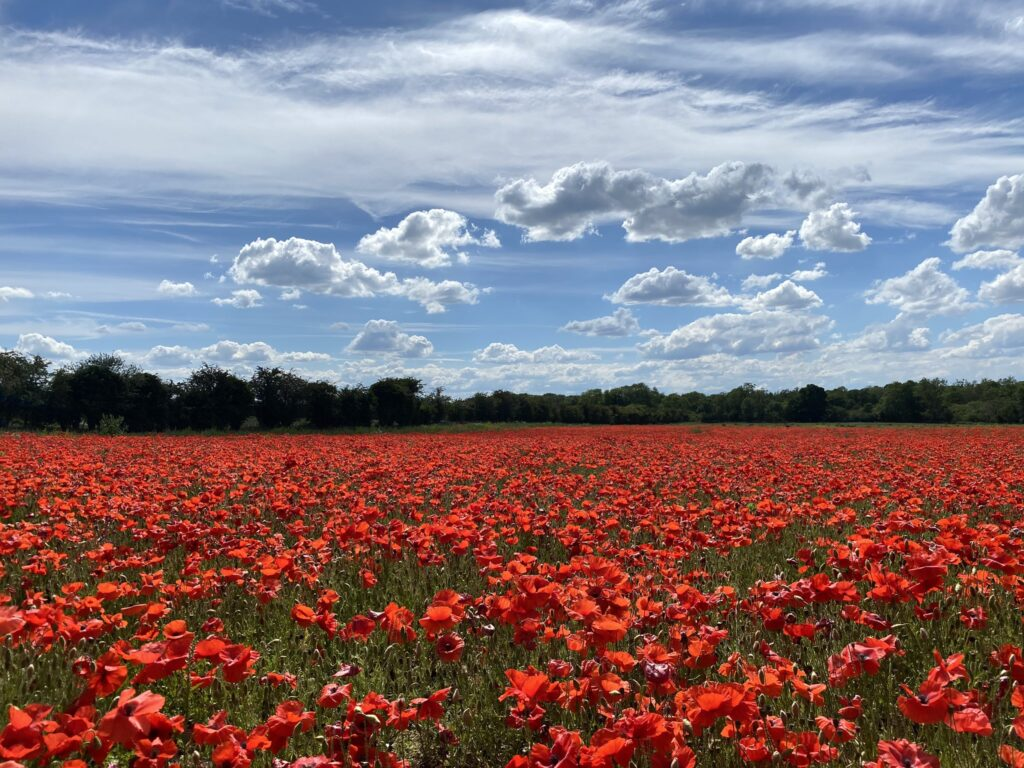 3rd Place A short trip into Norfolk from Cambridgeshire to see the fields of poppies on this beautiful summer's day by @glynpierson