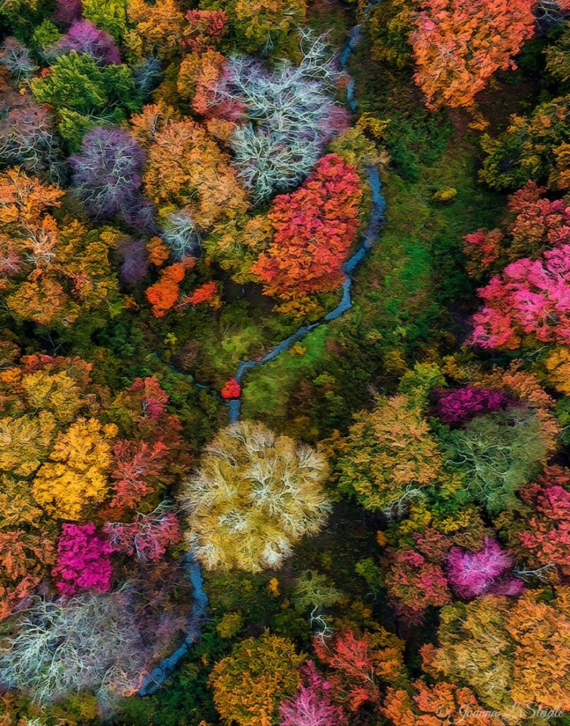 1st Place Autumn at Alewife', from Alewife Drain, Southampton NY by Joanna L Steidle @HamptonsDrone