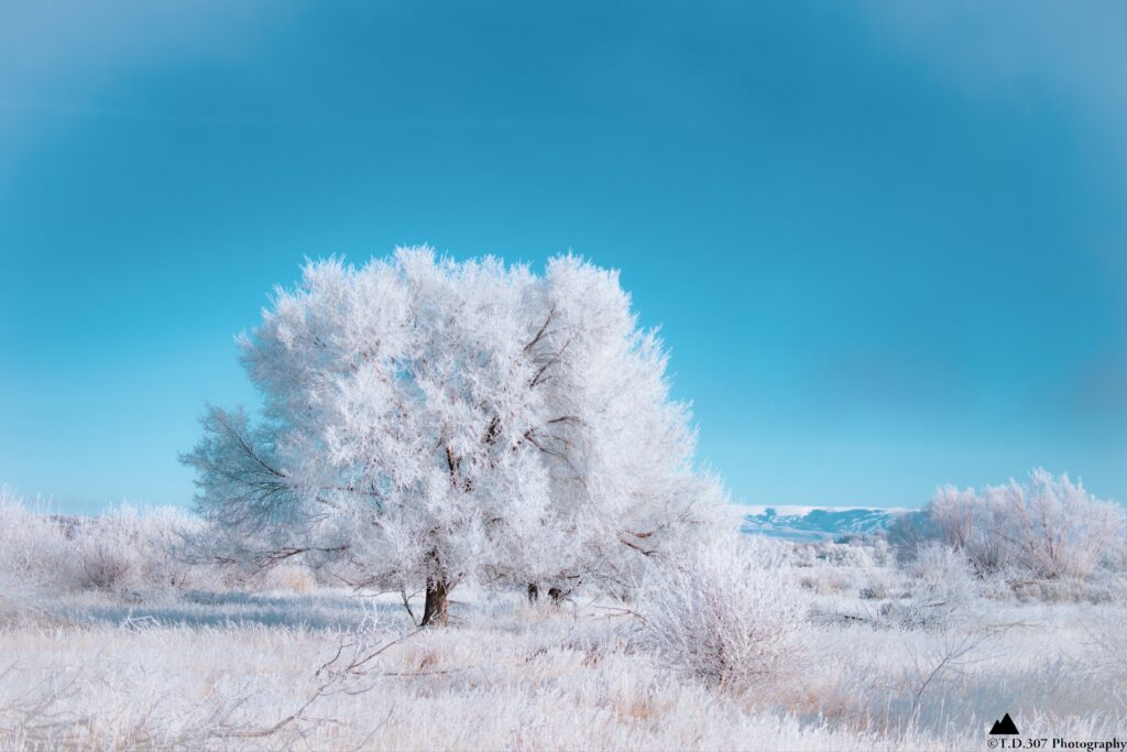 2nd Place Hoar frost blankets Northwest Wyoming by T.D.307 Photography @TonyD2155