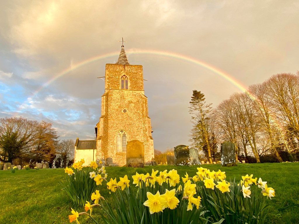 1st Place Daffodils spring to life under a full rainbow in Norfolk by Catherine McAndrew @cath_mcandrew